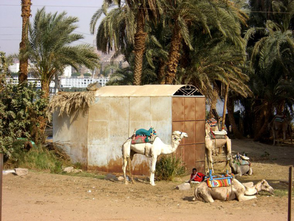Aswan, Egypt - Finding a local tour guide