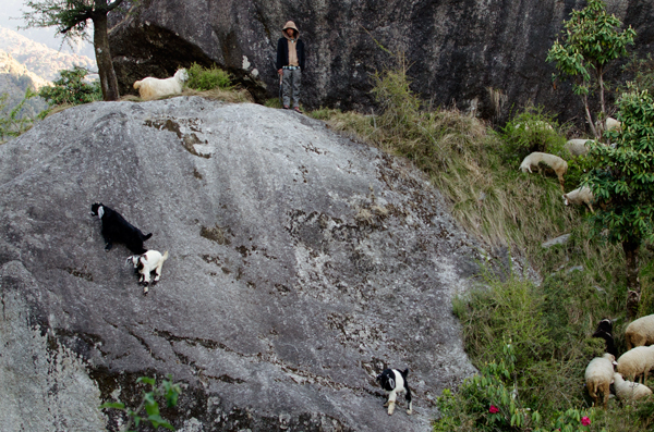 Hiking in Mcleod Ganj and Bhagsu Falls - Stupid Goats
