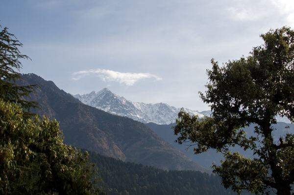 Snow Capped Peaks - Running In Mcleod Ganj, India