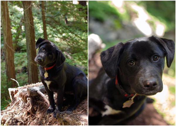 Camping in Big Sur and Los Padres National Forest - Doggie Paradise!