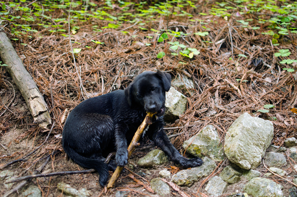 Camping in Big Sur and Los Padres National Forest - Dog Heaven