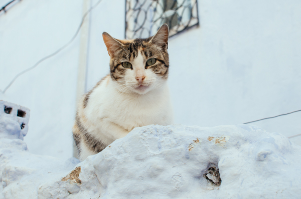 Traveling in Chefchaouen Morocco - Moroccan Feral Cats