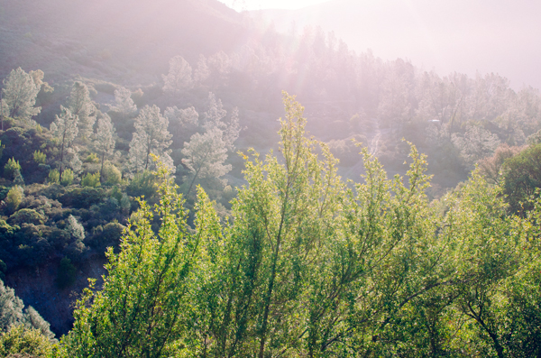 A 24 Hour Escape to Wine Country - The View from the Treehouse