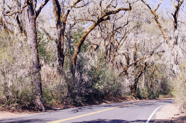 A 24 Hour Escape to Wine Country - On the road to Napa