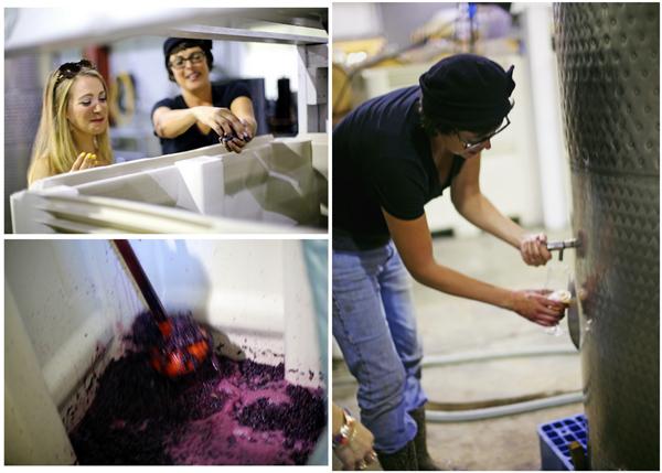 Emerson Winery Willamette Valley Oregon