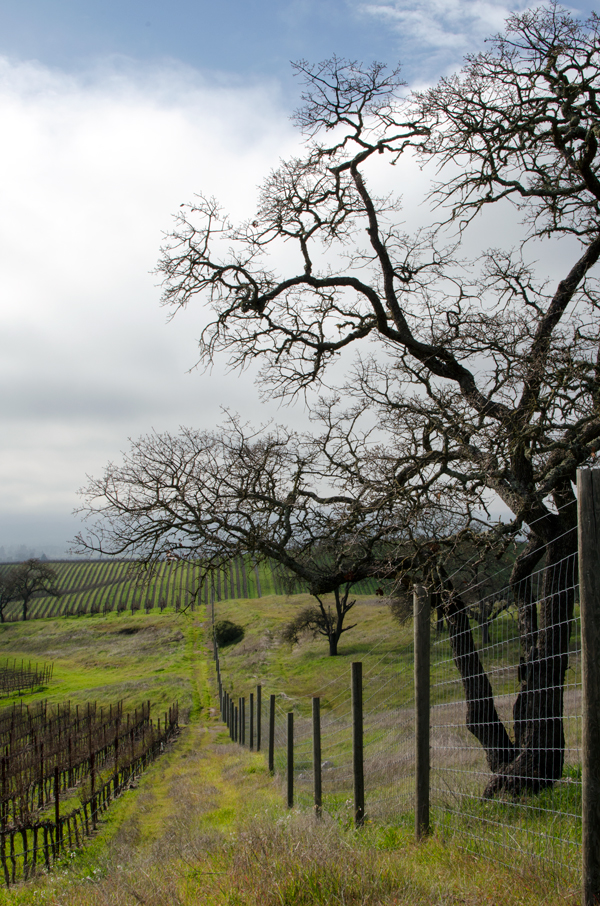 California Wine Country Ideas