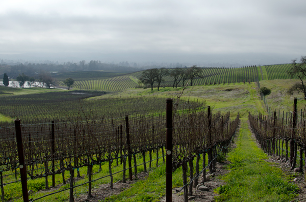 Where to do Wine Tasting in Napa Valley, California