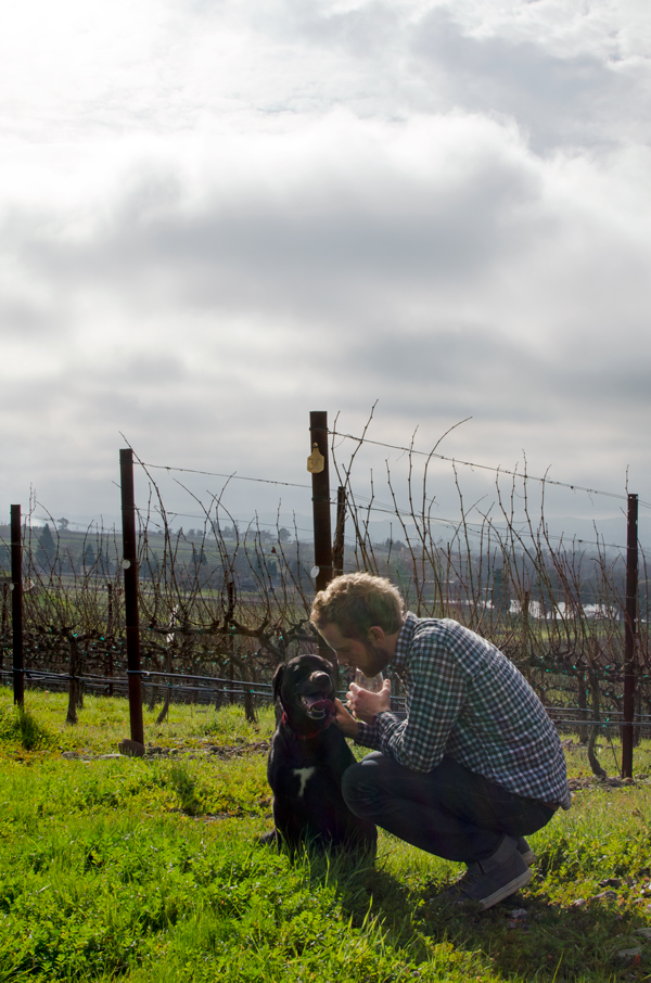 Dog friendly winery in Napa, California