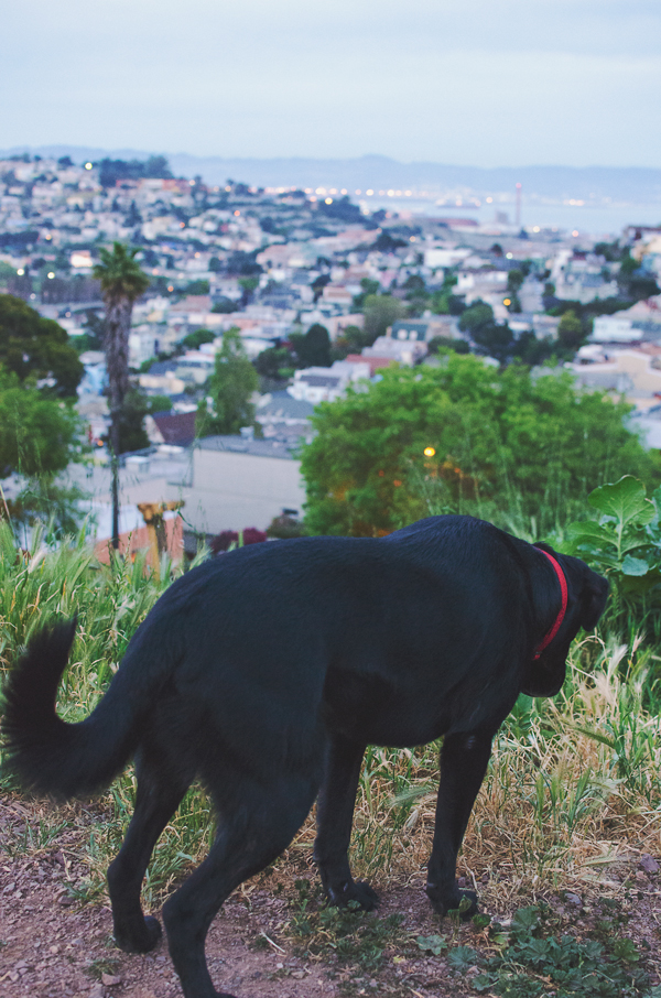 San Francisco Dog Friendly Parks // Bernal Heights