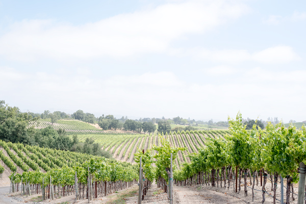 Napa & Sonoma Wine Tasting Ideas