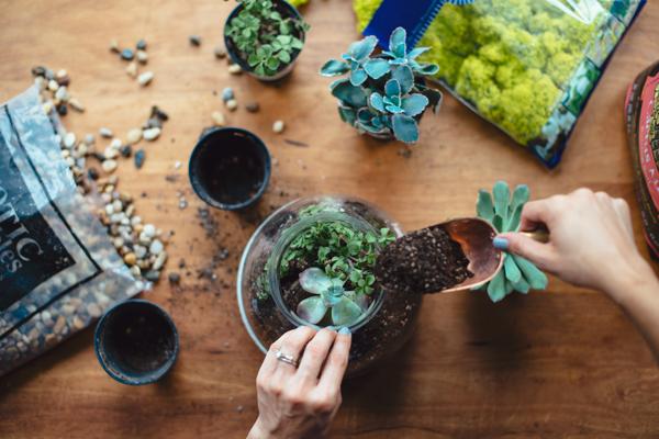 Live plant wedding table succulent centerpieces!