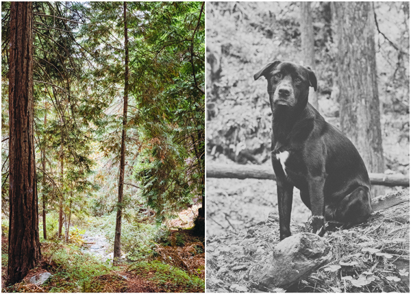 Camping with Dogs in Big Sur, California