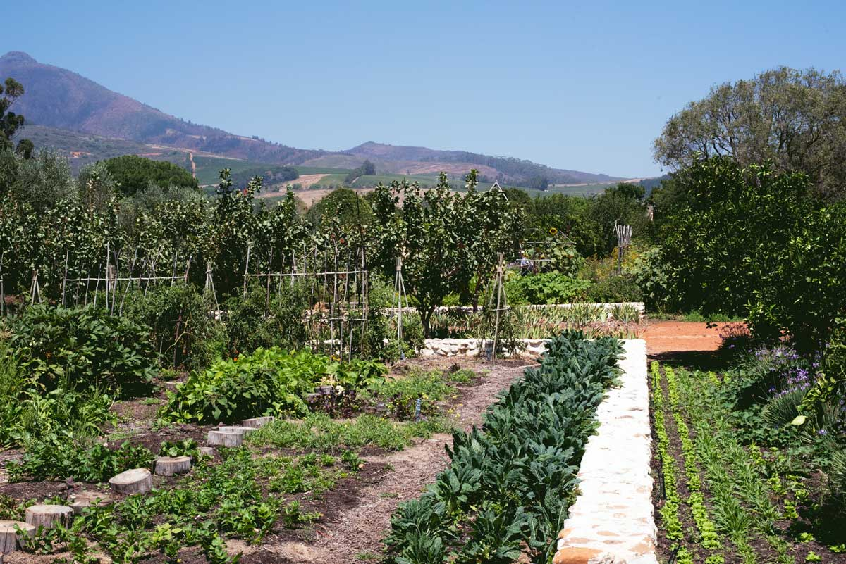 Things to do in Cape Town, South Africa Wine Country
