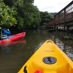 Sea Kayaking in the Okinawa Mangrove Forest in Japan