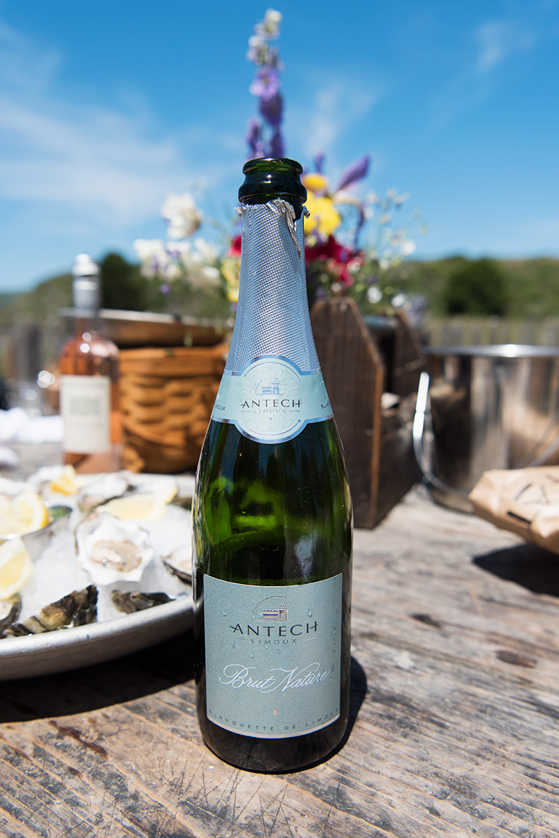 Best Wine Pairings for Oysters - Languedoc Wine Region
