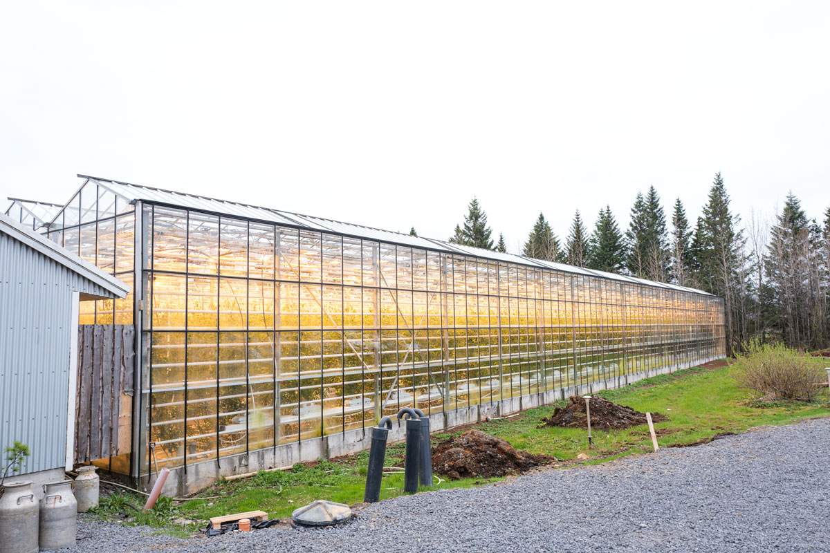 Fridheimar Farm Tomato Greenhouse Iceland Golden Circle