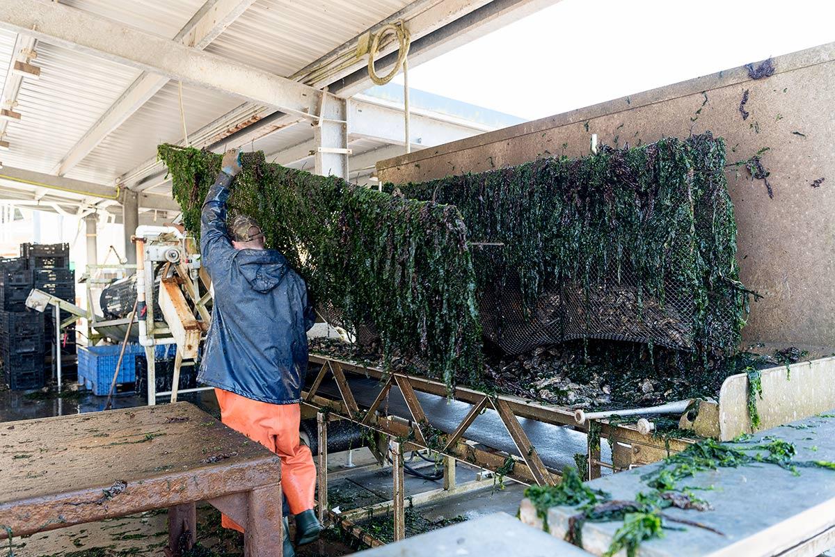 Hog Island Oyster Company Tours Marshall, CA
