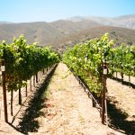 Hahn Winery Soledad, CA Review & ATV Tour + Wine Tasting