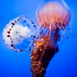 Monterey Ca Aquarium Info, Photos, Tickets