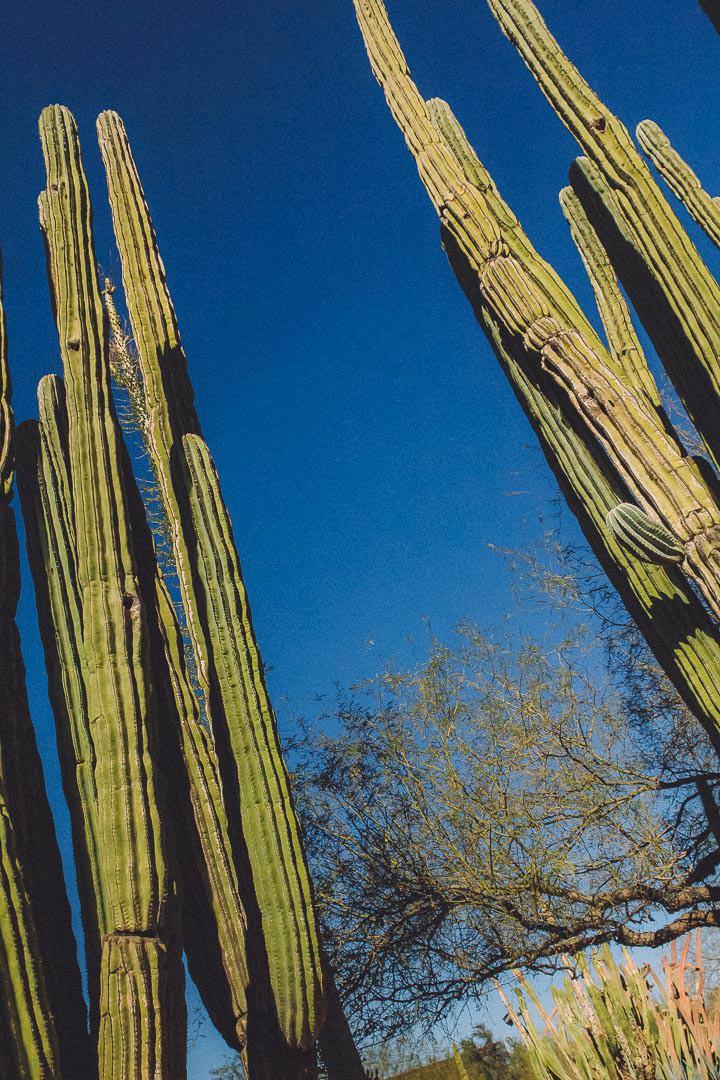 Desert Botanical Gardens Phoenix AZ