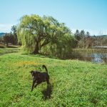 Dog Friendly Wineries Anderson Valley California - Lula Cellars