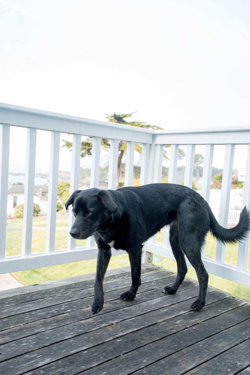 Dog Friendly Hotels Bed Breakfast Mendocino Coast California