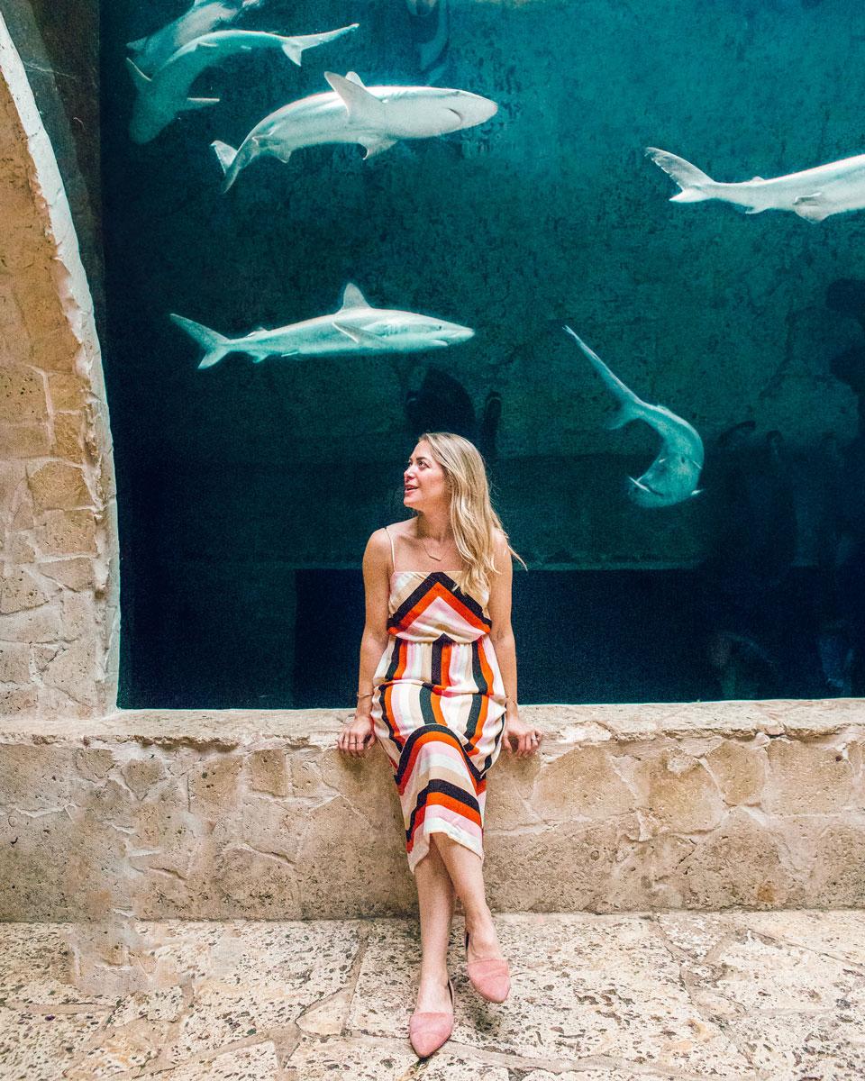 Things to Do in Dallas - Dallas World Aquarium
