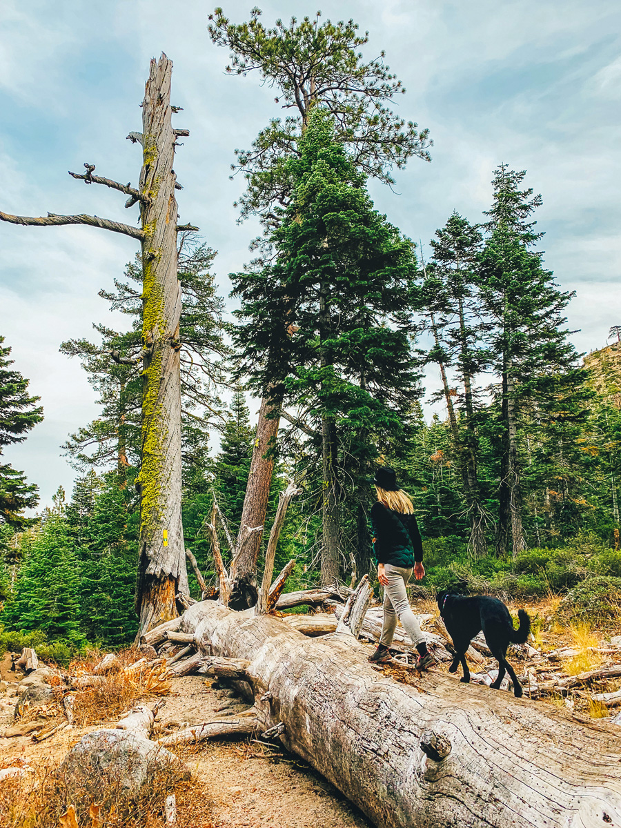 North Lake Tahoe Best Hikes Dog Friendly