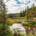 Horseshoe Lake Hike Beaver Dam Denali National Park