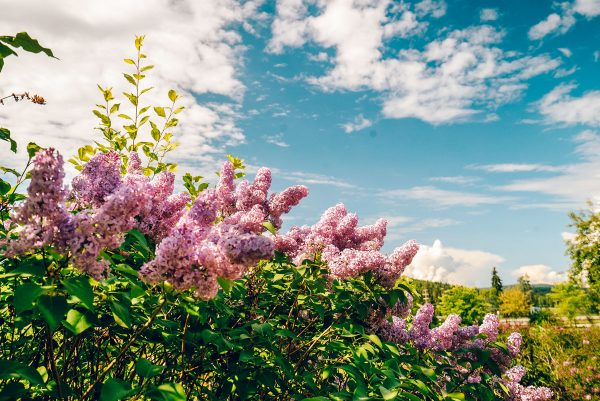 Georgeson Botanical Garden - What to Do in Fairbanks