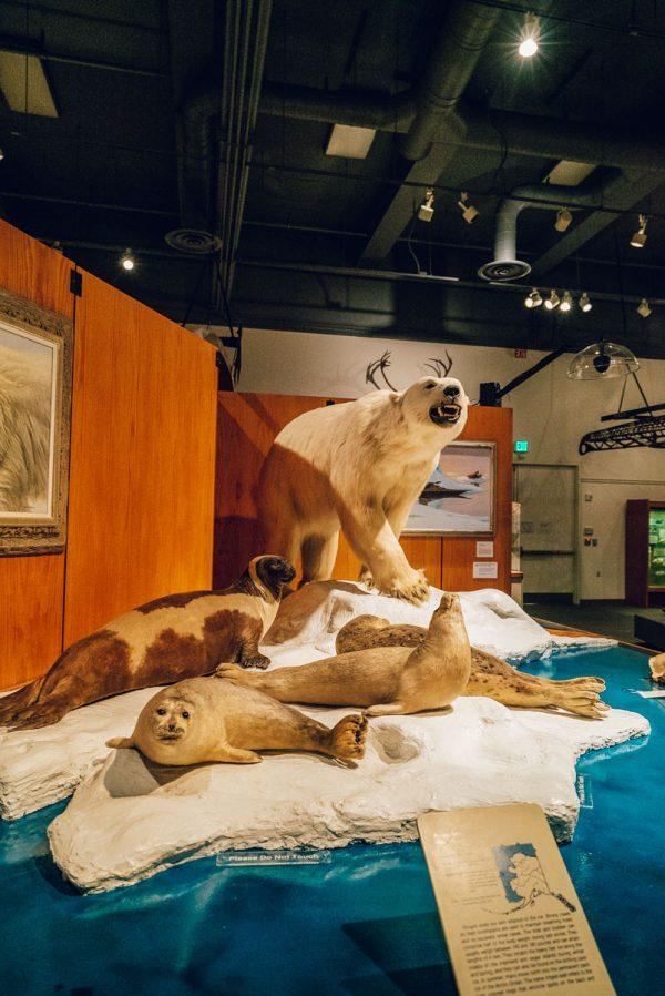 Museum of the North Fairbanks, Alaska Travel Guide