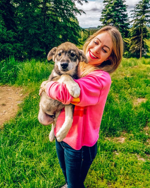 Paws for Adventure Sled Dog Tour Rides Fairbanks, Alaska