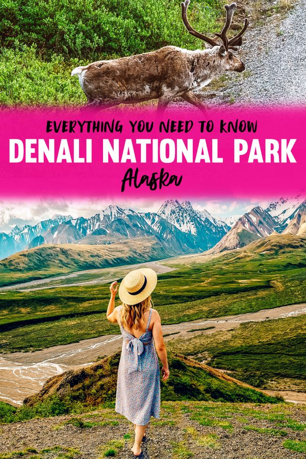 Denali National Park Alaska Travel Guide - What to Do, Where to Hike and Wildlife
