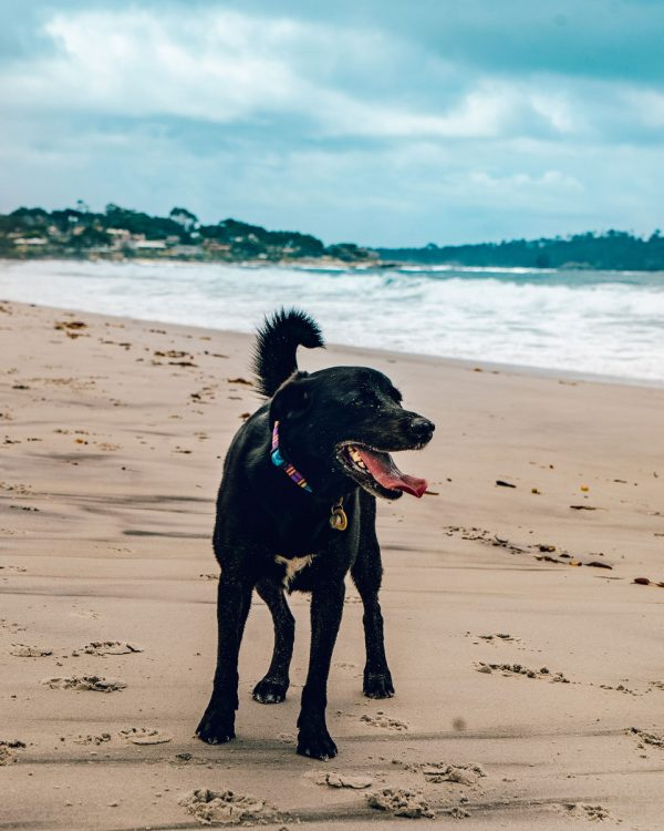 Dog Friendly Things to DO & Guide to Carmel, California