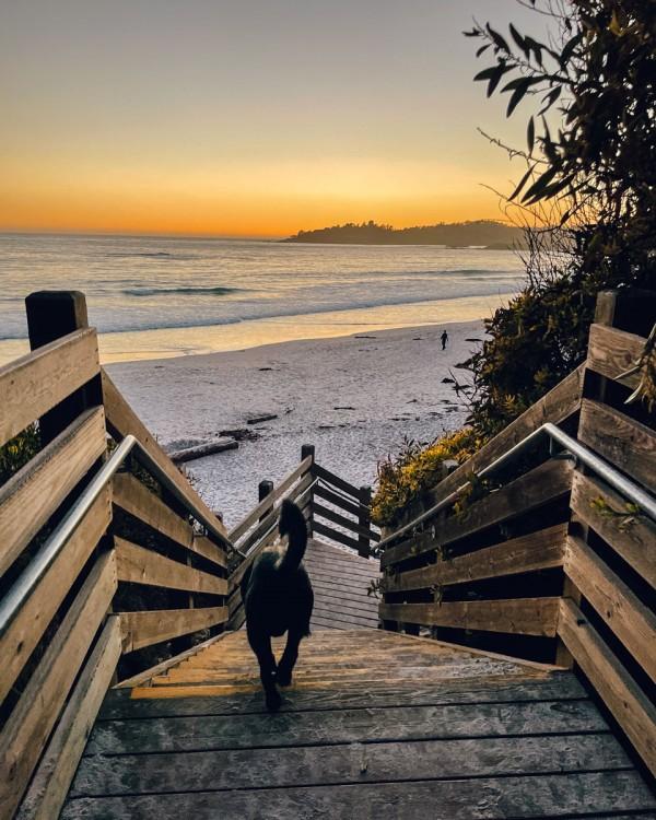 Carmel by the Sea Beach Dog Friendly